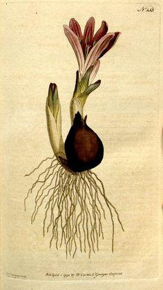 v.5-6=no.145-216 (1792-1793) - The Botanical magazine, or, Flower-garden displayed ... / - Biodiversity Heritage Library