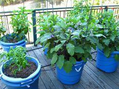 Frutas y hortalizas en macetas