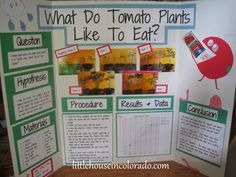 Little House In Colorado: Cannibal Tomatoes - A Science Fair Project