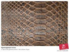 кожа крокодила: 19 тыс изображений найдено в Яндекс.Картинках