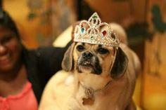 Amusing Dog In Crown