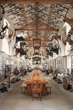 Georgian barn conversion by Leveson Design. Hunting Lodge Interiors, Hunting Lodge Decor, Log Home Interiors, Hunting Rooms, Cabin Design, House Design, Design Design, Taxidermy Decor, Taxidermy Display
