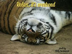 Boskoppies, relax it's weekend Relax, Animals, Pictures, Animales, Animaux, Animal, Animais