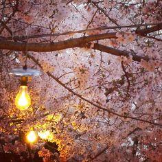 Pass Tokyo Tourism, Lamps, Tips And Tricks, Lightbulbs, Light Fixtures, Lights, Rope Lighting, Lanterns