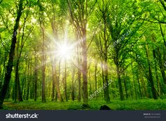 Purchase Tree Sunshine Photography Backdrops Wooden Floor Photo Studio Background from Felix Honey on OpenSky. Forest Photography, Scenic Photography, Photography Backdrops, Photo Backdrops, Fabric Photography, Backdrop Ideas, Product Photography, Digital Photography, Forest Background