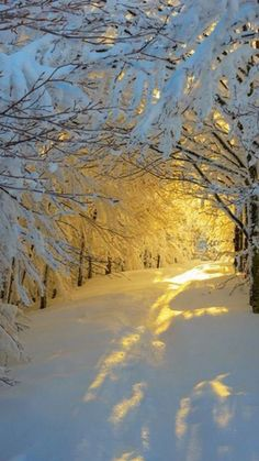 Beautiful Nature — sundxwn: Sunrise in the snowy woods by Roberto. Winter Pictures, Nature Pictures, Nature Images, Snowy Woods, Snow Scenes, Winter Beauty, Sunrise Landscape, Amazing Nature, Winter Wonderland