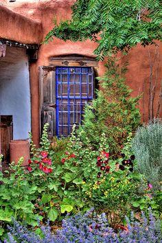 Albuquerque Garden by David Patterson