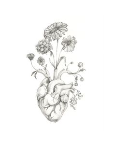 8x10 PRINT of original drawing Blooming Heart- graphite, art, anatomy, floral, heart, valentine via Etsy