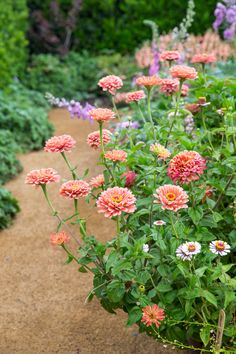 Potager Garden Most Popular Kitchen Garden Design Ideas 11 - Zinnia Garden, Cut Flower Garden, Flower Garden Design, Beautiful Flowers Garden, Flower Farm, Flower Beds, Amazing Flowers, Beautiful Roses, Flower Gardening