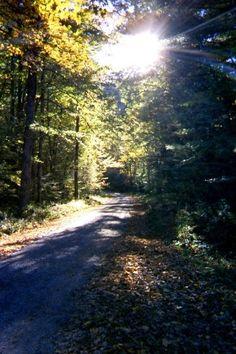 Fall road near Wellsboro, PA