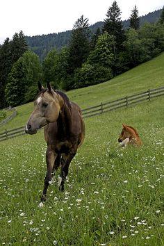 Pferd mit Baby - horse with baby