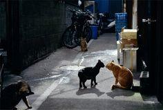 野良猫は野良猫同士仲良くしましょ。猫は猫の世界で楽しみましょう。そこに岩合さんも時々混ぜてあげましょう。