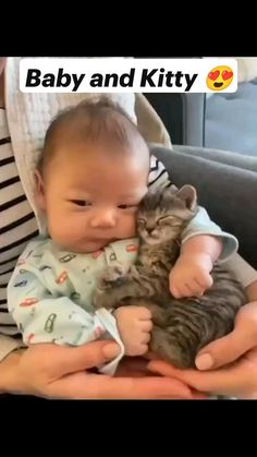 Funny Cute Cats, Cute Baby Cats, Cute Little Animals, Cute Funny Animals, Kittens Cutest, Cute Dogs, Cute Cats And Kittens, Cute Baby Videos, Cute Animal Videos