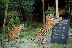 Animals Line Up For London Zoo's Annual Stocktake