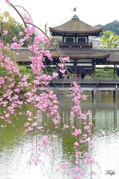 Heian Shrine, Kyoto. 平安神宮 泰平閣を望む。。 Okinawa, Places Around The World, Around The Worlds, Japanese Landscape, Kyushu, Visit Japan, Japan Art, Japanese Beauty, Japanese Culture
