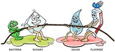 Dentistry is a tug of war between oral bacteria that feed on sugar vs. your saliva and fluoride and you brushing for 2 minutes twice a day and flossing before you go to bed.     Dentaltown - Patient Education Ideas