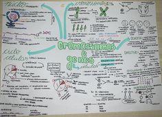 #cromossomos #genes #biologia #resumo