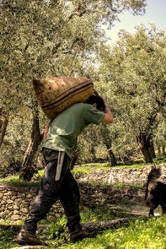 Die Firma Lesbian Donkey ist das Ergebnis unseres Wunsches nach Rückkehr zu den traditionellen Wurzeln und Grundsätzen unserer Vorfahren. Mehr Info finden Sie unter http://www.gutesvonkreta.de