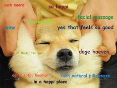 Doge good feels