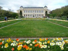 Pavots d'Islande dans la grande perspective du Jardin des Plantes, Paris 5e (75)
