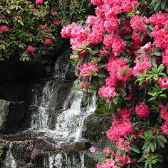more rhododendrons and waterfalls