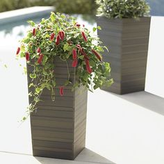 Tidore Planters  | Crate and Barrel front porch with mother-in-law's tongue plant