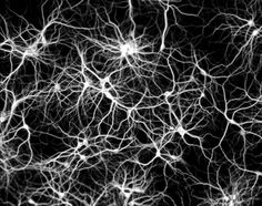 Brain Cells and Galaxy Clusters