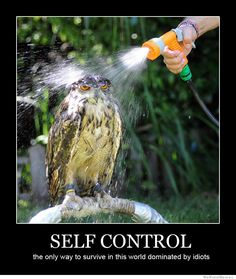 Self control - the only way to survive in this world dominated by idiots