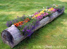 flowers in a fallen tree~love it!