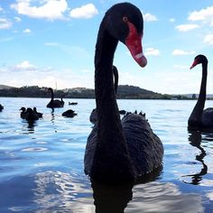 The locals sure are friendly in Canberra! Thanks to Instagrammer @fran_t for sharing this image and tagging #VisitCanberra