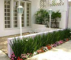 Moreia como cerca viva acompanhada da planta beijo turco