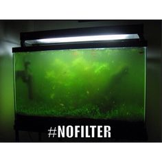 Don't end up like this! Pick out a good filter for your tank!    #nofilter