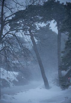 Kirjatoukka ja Herra Kamera: Myrskyn merkki