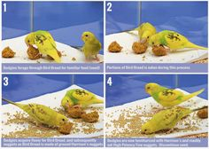 images budgies pellet conversion bread How Do I Improve My Parakeets Diet? Cockatiel, Budgies, Parrots, Monk Parakeet, Biscuits And Gravy, Chicken And Waffles, Bird Food, Bird Cages, Small Birds