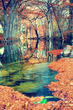 Texas River Landscape Photography - Autumn Foliage - Cypress Trees - Nature - Hill Country