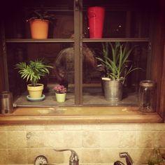 Window plants!