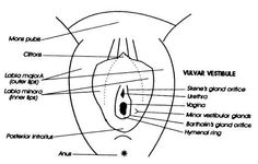 http://www.osovo.com/diagram/vulvaranatomydiagram.jpg