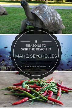 5 Reasons to Skip the Beach in Mahé, Seychelles