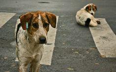 Σκυλιά επιτέθηκαν σε ανυπεράσπιστη γυναίκα στο Βαρθολομιό