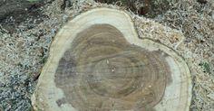 Ein Baum ist schnell gefällt, aber um einen Baumstumpf zu entfernen, braucht man entweder viel Zeit oder viel Kraft.