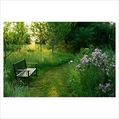 Meadow and lilac.   Herefordshire / on TTL Design