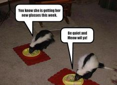 Funny Animal Pictures With Captions | Funny Animals with Quotes .....ENJOY!!