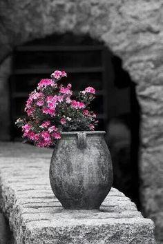 SRING TIME....    Elegant pot and flowers.