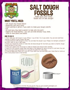 Salt Dough Fossils | Animal Jam Academy