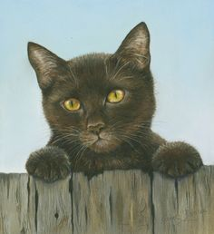BLACK CAT BY JANET PIDOUX
