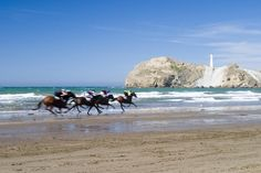 Castlepoint beach horse races (new Zealand)  The historic Wairarapa beach races date back to 1872 when local station hands competing on farm hacks would compete for bottles of rum and any stray coins. However in recent times the races have progressed into a unique family day out with the emphasis on entertainment and picnicking.