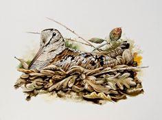 Hunting Art, Game Birds, Watercolor Bird, Wildlife Art, Pyrography, Blue Bird, Animals And Pets, Squirrel, Lion Sculpture
