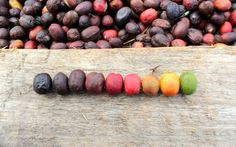 Discover Ethiopia: A Portrait of a Coffee Producing Country   The Specialty Coffee Chronicle