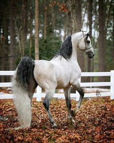 I would give anything to have a horse this beautiful