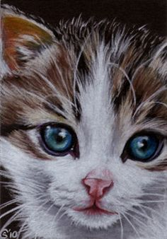 Tabby 59 CAT grey ginger orange tiger kitty kitten drawing painting Sandrine Curtiss Art Limited Edition PRINT ACEO. $6.00, via Etsy.